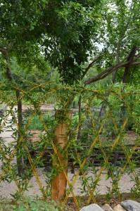 jardin abbaye bonnefont 18
