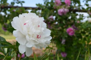 jardin abbaye bonnefont 2