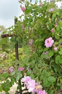 jardin abbaye bonnefont 20
