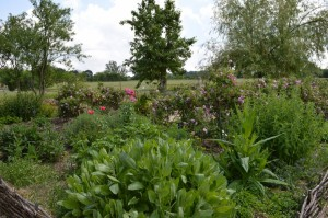 jardin abbaye bonnefont 25