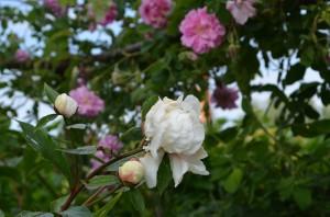 jardin abbaye bonnefont 3