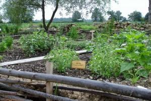 jardin abbaye bonnefont 32
