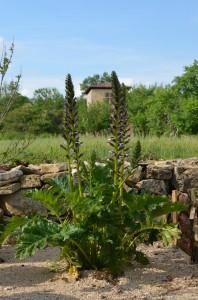 jardin abbaye bonnefont 6